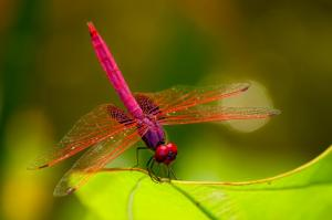 1318947739_Colourfull-dragonfly